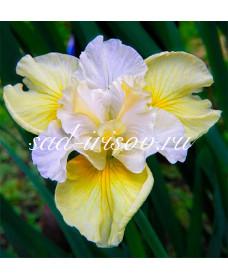 Yellow Tail (Йеллоу Тейл)