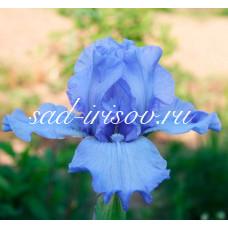 Ирис NEON BLUE (Нион Блу)